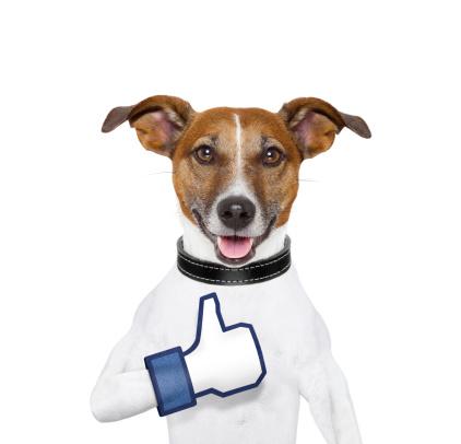 i like dog with a thumb up