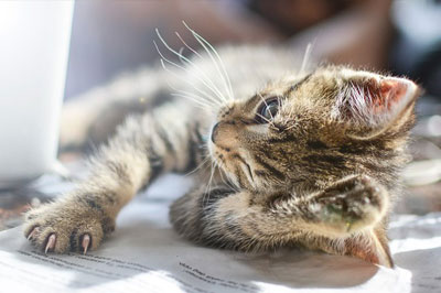 funny cat lying near the book