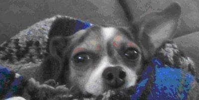 cute dog face close up