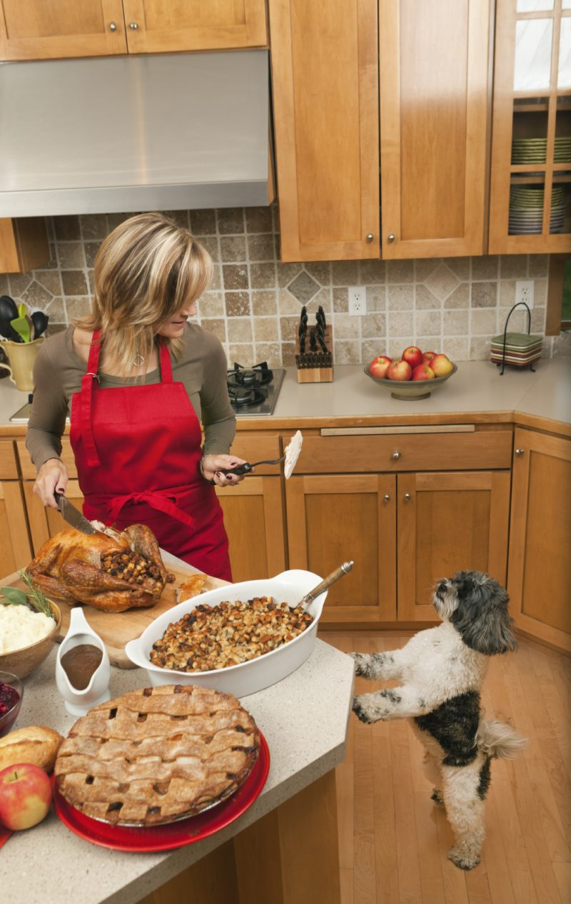 Lady making food for dog