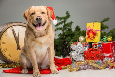 dog with gifts