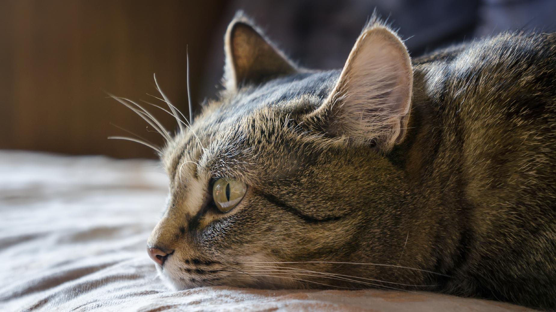 Dreamy cat.
