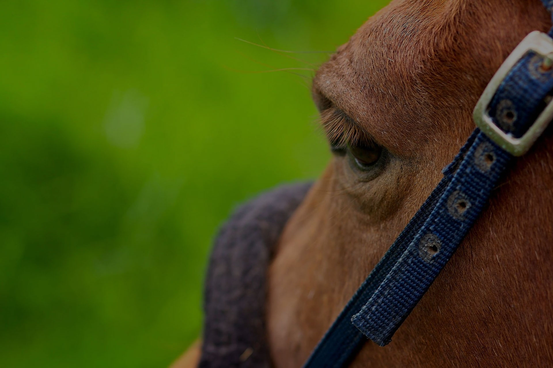 Beautiful horse outdoor on meadow