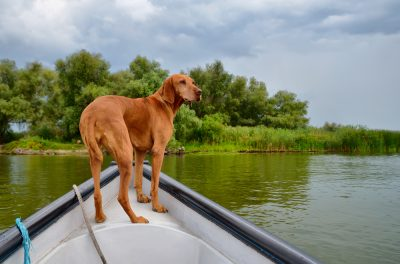 Brown dog on a fishing boat in Danube Delta