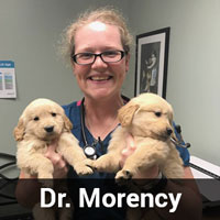 Dr. Morency