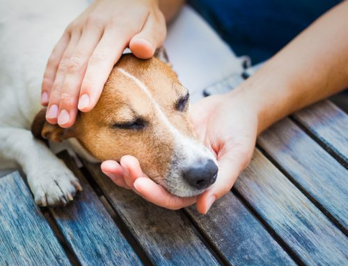 Could Your Pet Be In Pain?