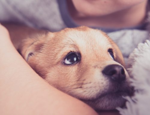 What to Expect When You're Expecting (A New Puppy): Your Puppy's First Year