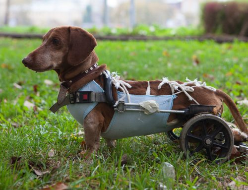 10 Tips to Help Make Your Disabled Pet's Life Easier