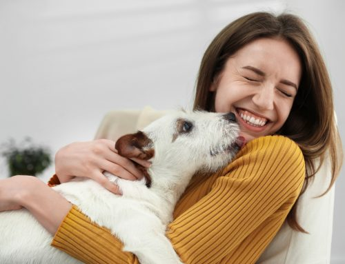 The Importance of AAHA Accreditation for You and Your Pet